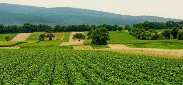 Započinje isplata preostalih potpora poljoprivrednicima