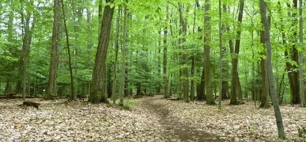 Objavljen natječaj za degradirane šume