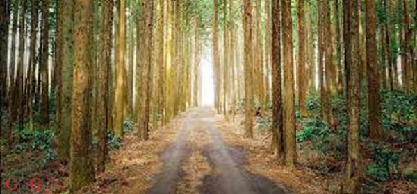 Natječaj za ulaganje u šumsku infrastrukturu