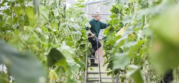 Županija daje potpore za poljoprivredu