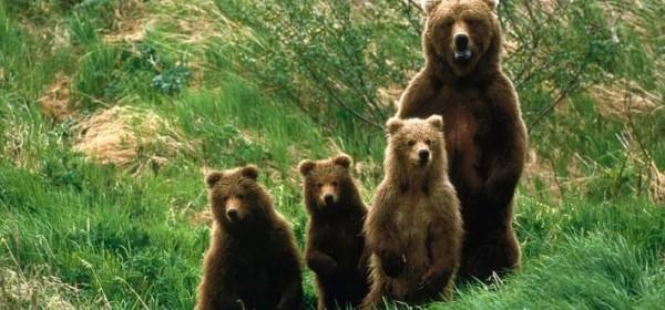 U srijedu predavanje o medvjedima