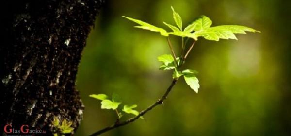 Stotine milijuna kuna za šume i oko šuma