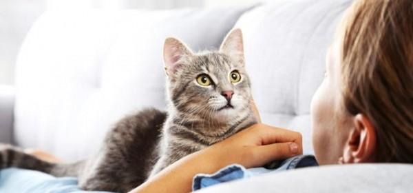 Eto ti ga na, i mačke mogu oboljeti od koronavirusa