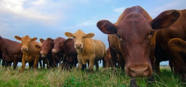 650 milijuna kuna za nove natječaje u poljoprivredi