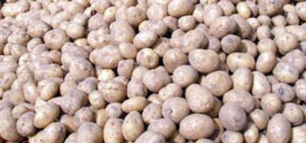 Proizvođačima krumpira 10 milijuna kuna financijske pomoći zbog korona kri-ze