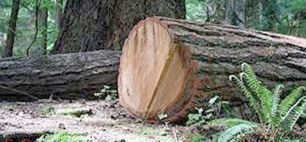 Drva su uvijek bila - na cijeni
