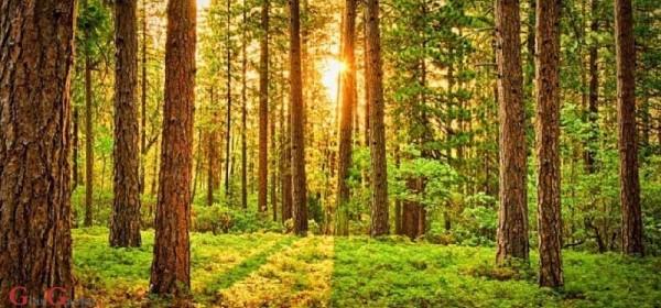 Hrvatske šume uplatile 42 milijuna kuna šumskog doprinosa za 1. kvartal
