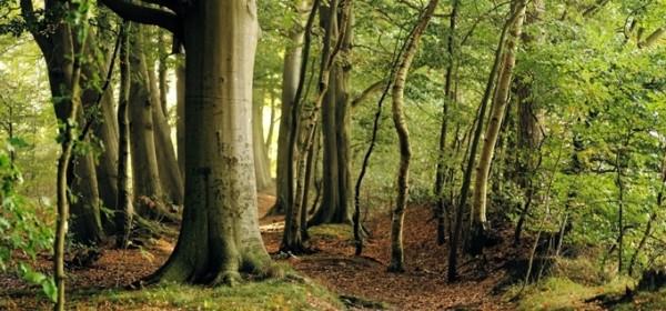 Produžen rok za Konverziju degradiranih šumskih sastojina i šumskih kultura