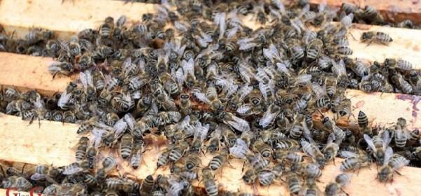Donesen Pravilnik o provedbi programa potpore međimurskim pčelarima vrijedan milijun kuna