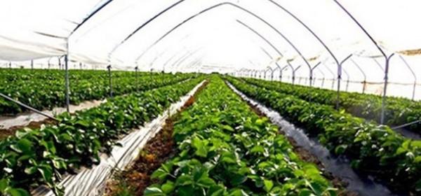 Uskoro natječaj za proizvođače povrća u plastenicima