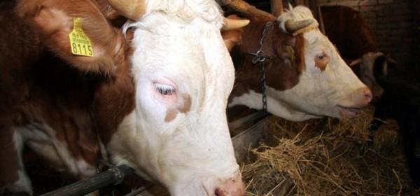 Ostvaren kontakt s 1.223 PG-a i zaprimljeno 130 tona stočne hrane
