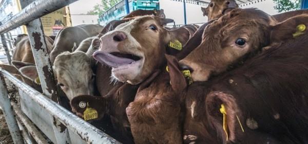 Nova Uredba o kontroli životinja i robi koja ulazi u EU