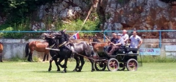5. Smotra konja u Krivom Putu