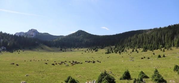 Tradicionalna ispaša u Nacionalnom parku Sjeverni Velebit