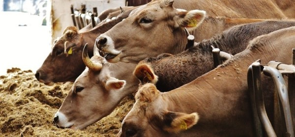 Sektoru mljekarstva 20 milijuna kuna pomoći u koronakrizi